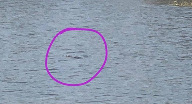 Nghi 2 con cá sấu nặng gần 100kg bơi lập lờ trong hồ nước ở Vũng Tàu: Tìm kiếm, thuê thợ vây bắt