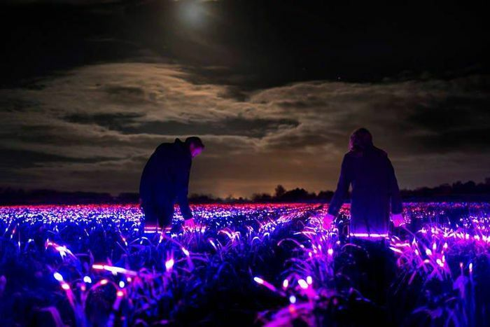 """Hàng nghìn đèn LED màu biến nông trại Hà Lan thành """"xứ sở thần tiên"""" về đêm"""