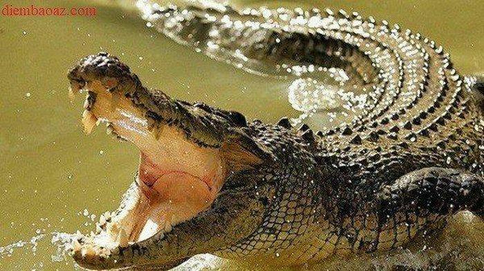 Bị ngoạm vào đầu, người đàn ông tự cạy hàm cá sấu để thoát thân