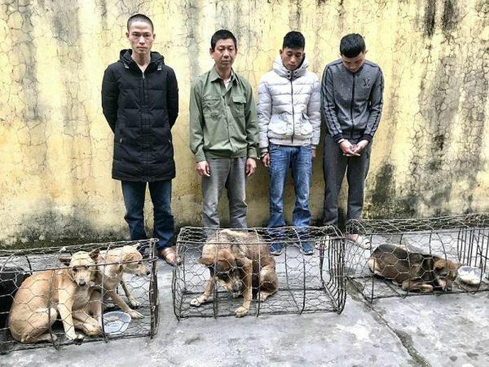 Hà Tĩnh: Gây ra hàng chục vụ trộm chó trên địa bàn, 4 đối tượng bị bắt giữ