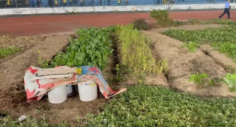 """Sân Lạch Tray – Hải Phòng: Mặt sân xấu """"phát hờn"""", lại còn trồng rau, nuôi gà"""