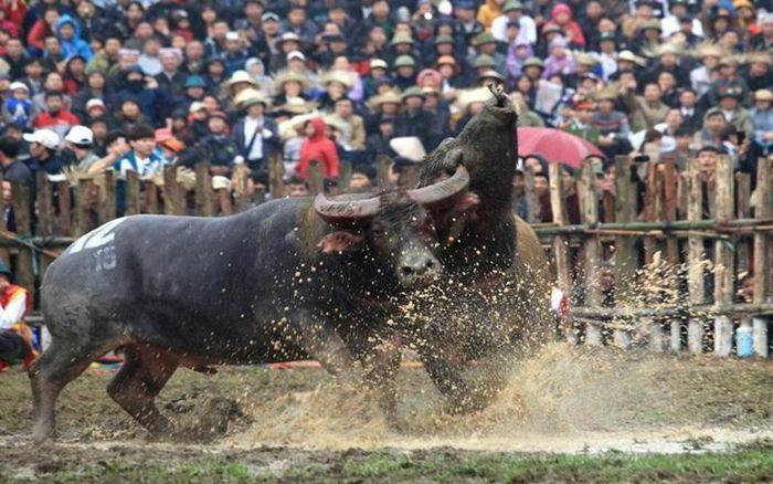 Vĩnh Phúc hủy bắn pháo hoa dịp Tết Tân Sửu, dừng các lễ hội lớn