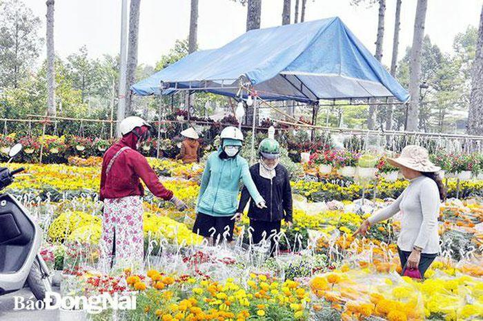 Hồi hộp chờ… bán hoa Tết