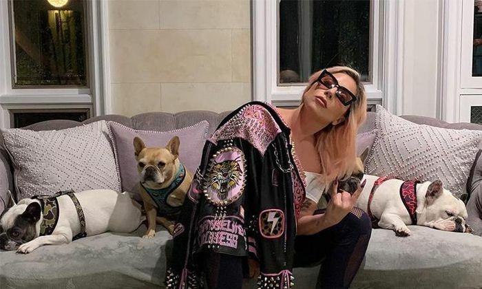 Lady Gaga treo thưởng 500.000 USD để chuộc chó