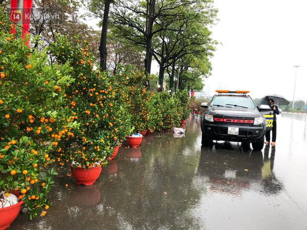 """Cận cảnh hàng trăm gốc quất ở Hà Nội đổ la liệt vì mưa lớn ngày 28 Tết, tiểu thương khóc nghẹn: """"Chưa năm nào buồn như Tết năm nay"""""""