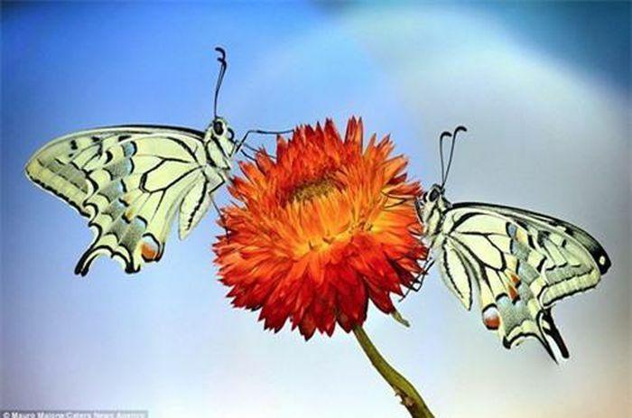 Sự đối xứng tuyệt đẹp của cặp côn trùng trên cánh hoa