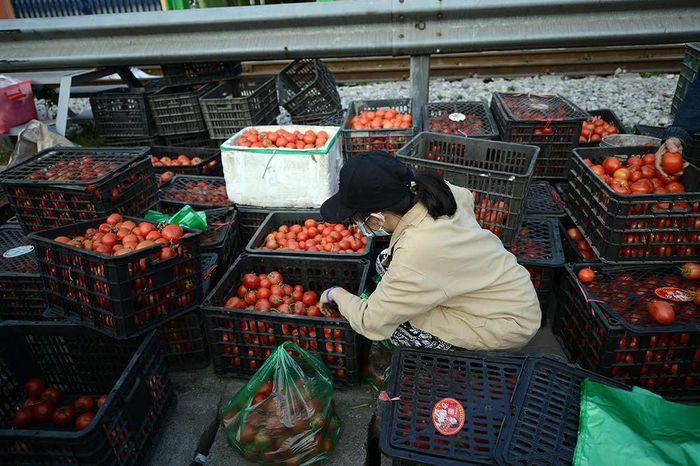 Hà Nội kêu gọi giải cứu hàng trăm nghìn tấn nông sản, thủy sản hai tỉnh