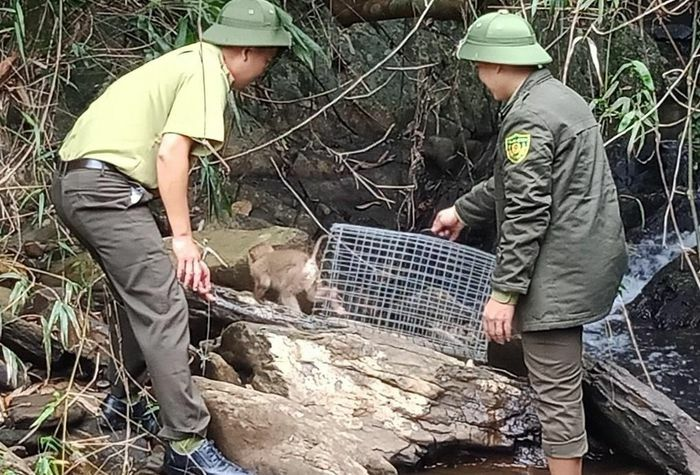 """Kim hầu vương"" về rừng"