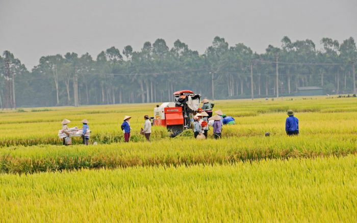 Huyện Triệu Sơn (Thanh Hóa): Mục tiêu đạt chuẩn nông thôn mới năm 2022