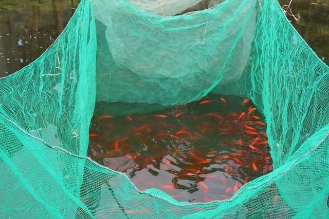 Quảng Bình: Làng cá chép đỏ ảm đạm trong dịp Tết ông Công, ông Táo