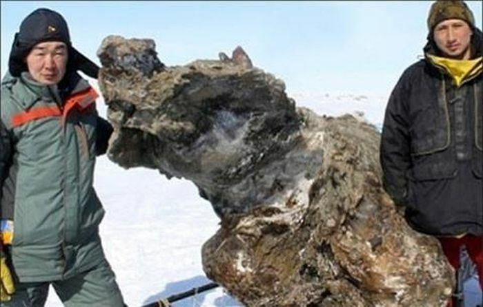 Tìm thấy xác voi ma mút dính máu và thịt