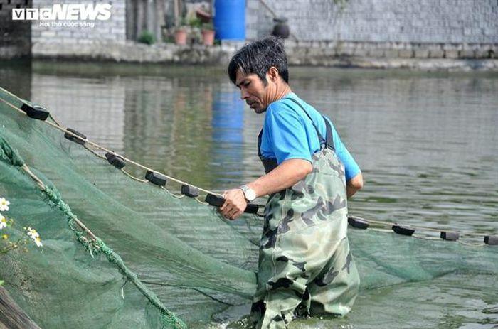 Làng nuôi cá chép đỏ xứ Thanh kiếm bộn tiền ngày giáp Tết