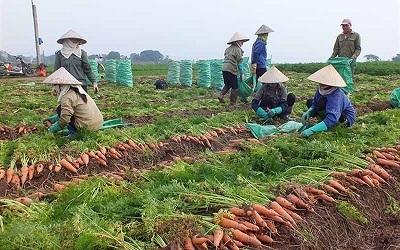 Hải Dương: Người dân huyện Cẩm Giàng được cấp thẻ ra đồng sản xuất nông nghiệp