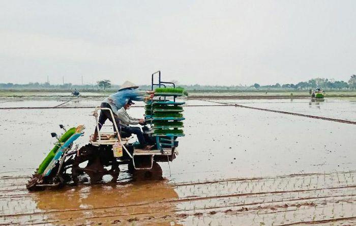 Sản xuất vụ xuân 2021 tại Hà Nội: Nỗ lực đạt thắng lợi