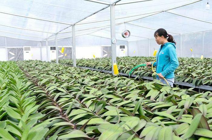 Thanh Oai phát triển nông nghiệp sinh thái