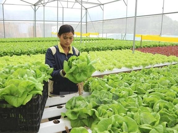 Lao động Việt hết hạn hợp đồng được làm việc thời vụ tại Hàn Quốc