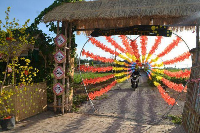 Ngây ngất với cánh đồng hoa độc nhất vô nhị tại Bình Phước