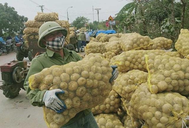 """Quảng Ninh """"giải cứu"""" khoai tây cho người dân khu vực bị phong tỏa"""