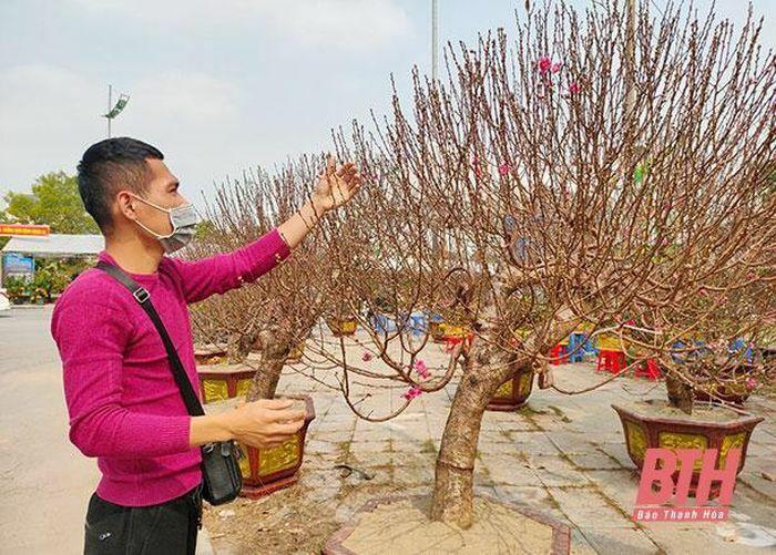 Chuyện buôn bán hoa, cây cảnh tết
