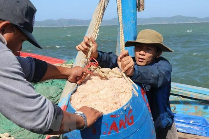 Phú Yên: Ngư dân trúng đậm mùa ruốc trong chuyến biển đầu năm