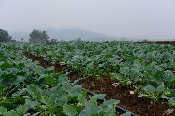 Một ngày ở trang trại rau truy xuất nguồn gốc đa nền tảng đầu tiên ở Việt Nam