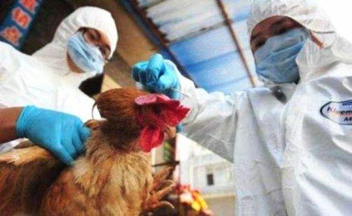 14 tỉnh thành bùng phát cúm gia cầm, Thủ tướng chỉ đạo quyết liệt dập dịch