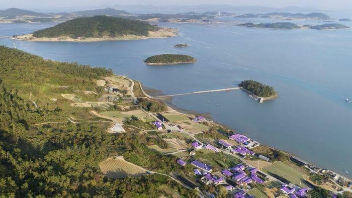 """Hòn đảo thần tiên """"tím lịm"""" đẹp đến nao lòng ở Hàn Quốc"""