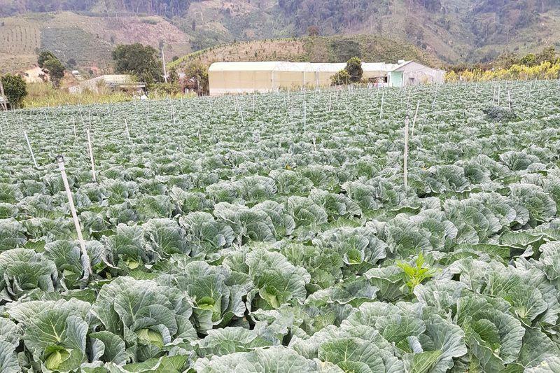"""Lâm Đồng: Hợp tác xã xin """"giải cứu"""" hàng trăm tấn nông sản vì dịch Covid-19"""