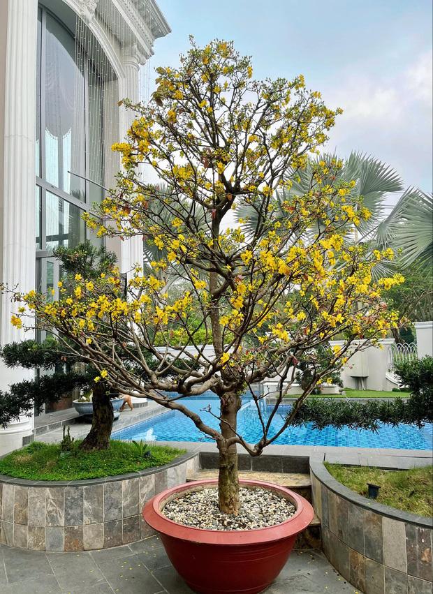 4 nhà hào môn Vbiz trang trí đón Tết: Bảo Thy – Hà Tăng sáng nhất khu nhà giàu, sân nhà Lan Khuê khủng như công viên