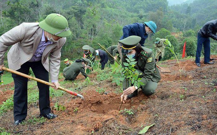 Yên Bái tập trung trồng mới hơn 3.000 ha rừng