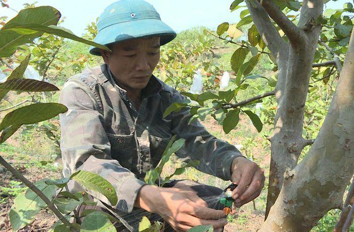 Hải Hà: Hiệu quả ứng dụng KHKT trong sản xuất nông nghiệp