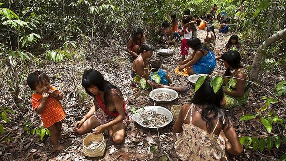 """Cuộc chiến phủ lại rừng xanh – Kỳ 5: Những hạt giống """"nhiệm mầu"""" ở Brazil"""