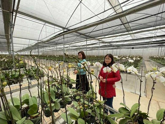 Đầu tư hàng chục tỷ đồng trồng lan hồ điệp theo công nghệ Israel