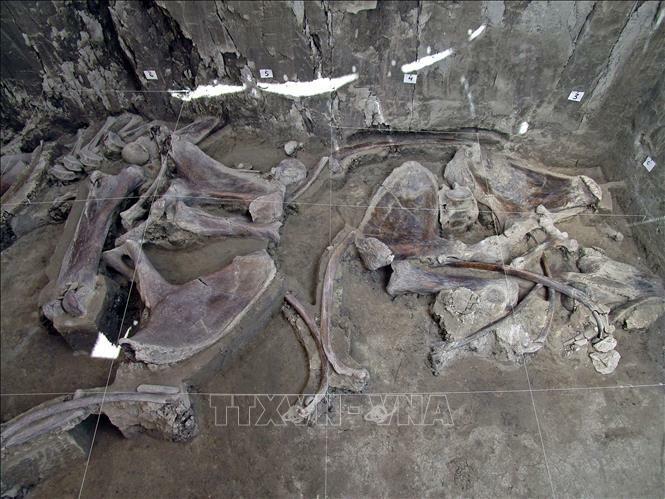 Giải mã ADN lâu đời nhất thế giới từ voi ma mút cách đây hơn 1 triệu năm