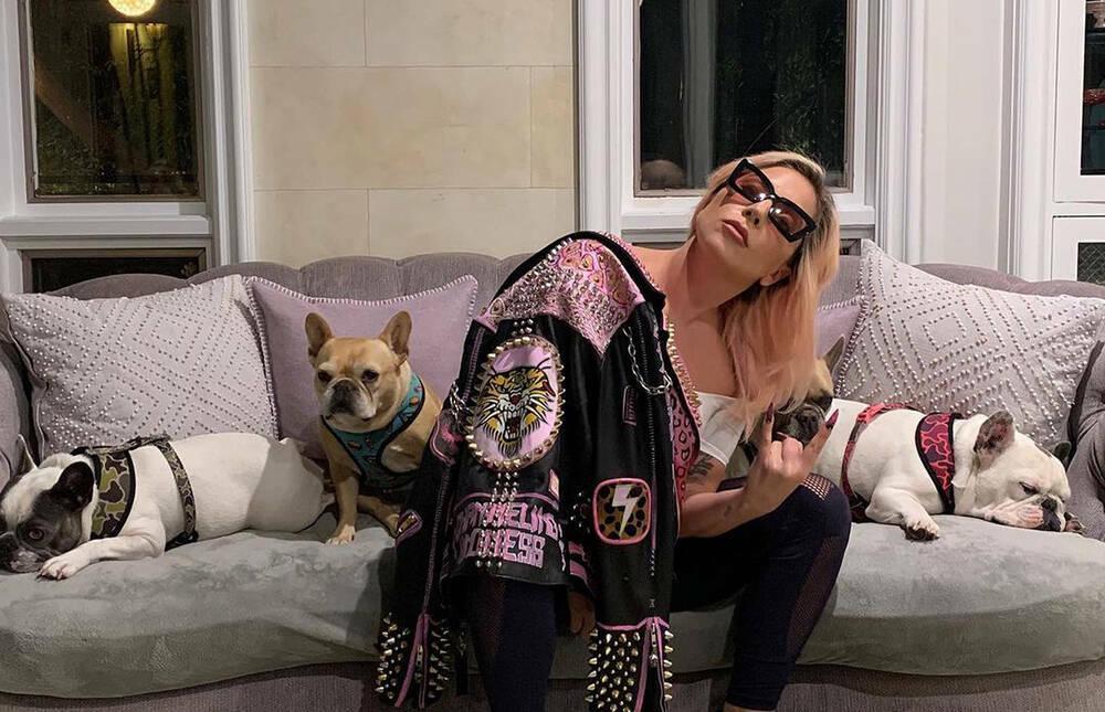 Siêu sao Lady Gaga treo thưởng hơn 11 tỷ đồng tìm hai chú chó cưng bị bắt trộm