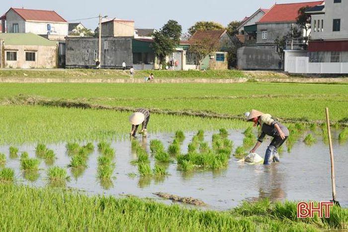 Hôm nay, Hà Tĩnh tiếp tục nắng đẹp, thuận lợi cho nông dân chăm sóc cây trồng vụ xuân