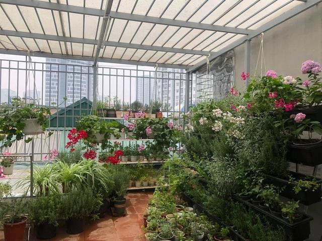 Khu vườn trăm loài thảo mộc xanh tốt trên sân thượng của mẹ đảm Hà thành