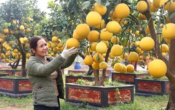 Nông nghiệp Hà Nội lấy thị trường làm căn cứ phát triển