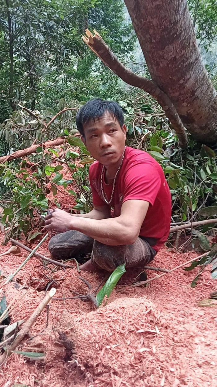 Tạm giữ hai đối tượng phá rừng những ngày cận Tết Tân Sửu