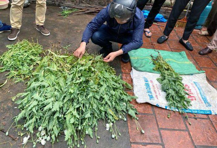 """Hà Nội: Phát hiện vườn cây anh túc """"len lỏi"""" giữa làng hoa Tây Tựu"""