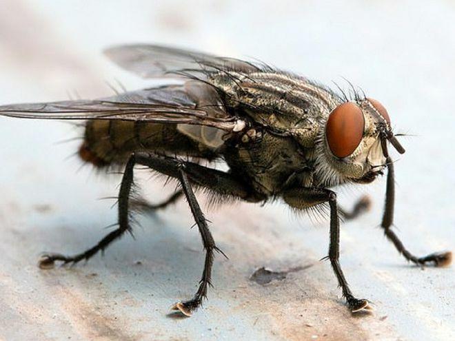 Bị con ruồi mắc kẹt mí mắt mà tưởng… lông mi rơi vào