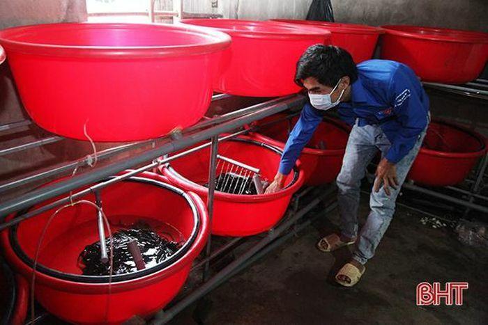 Thanh niên nghèo nuôi chí làm giàu từ thuần dưỡng lươn đồng ở Hà Tĩnh