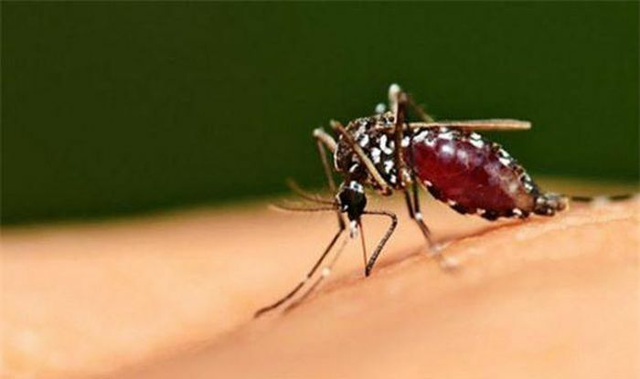 Những cách đuổi muỗi và diệt muỗi đơn giản, dễ làm