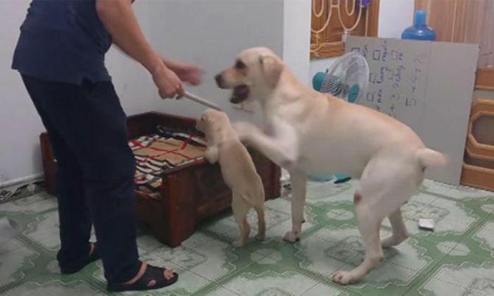 Từ 20/4, đánh đập chó mèo, vật nuôi sẽ bị xử phạt tới 6 triệu đồng