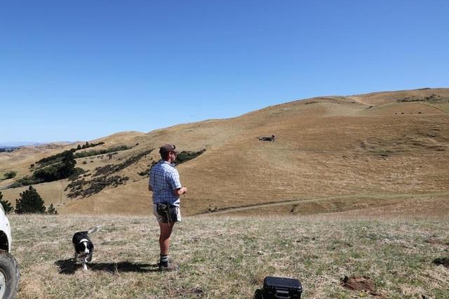 Chăn bò bằng máy bay không người lái, nông dân thư thả ngồi nhà uống cà phê