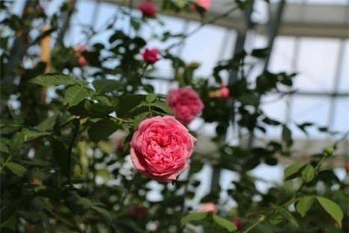 """Khám phá khu vườn """"kỳ hoa dị thảo"""" tại Nha Trang"""