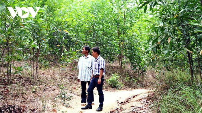 Sinh kế đồi – rừng nâng thu nhập cho người dân Đắk Lắk