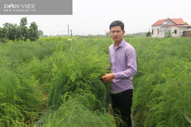 """Bắc Ninh: Trồng thứ """"rau hoàng đế"""" nhìn xa cứ như đồng cỏ dại, sáng mở mắt ra hotboy nông dân này có 15 triệu"""