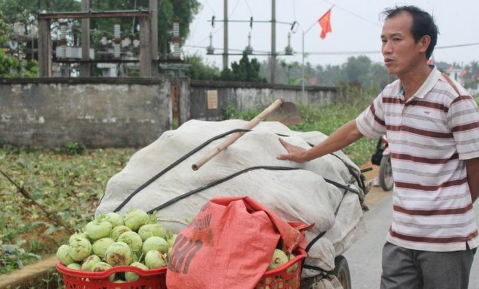 Nghệ An: Nông dân khóc ròng vì ''tắc'' đầu ra cho nông sản