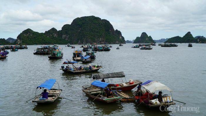 Quảng Ninh: Cấm neo đậu phương tiện thủy tại vùng đệm ven bờ Vịnh Hạ Long